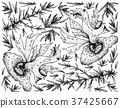Hand Drawn of Sea Vegetables or Seaweed Background 37425667