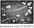 Sea Vegetables or Seaweed on Chalkboard 37425673