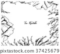 海藻 框架 边框 37425679
