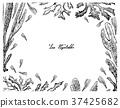 海藻 海带 藻类 37425682