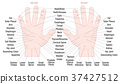 Hand Reflexology Zone Massage Areas Names 37427512