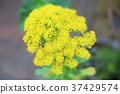 植物 植物学 植物的 37429574