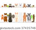 套逗人喜愛的寵物橫幅,面孔和後面 37435746