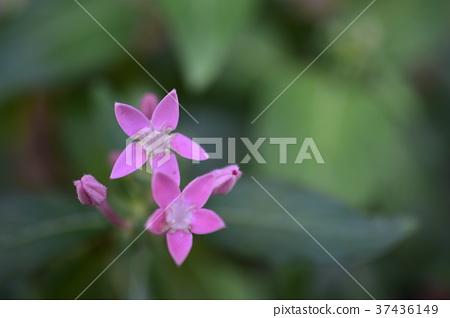 花卉 37436149