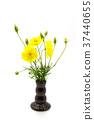 Yellow cosmos flower. 37440655