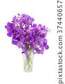 Purple Orchid flower. 37440657