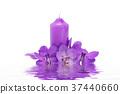 Purple Orchid flower. 37440660