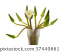 Water lily in the glass 37440661