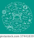 island octopus sea 37441639