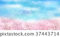 櫻花春天風景背景 37443714