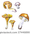 Mushrooms healthy food in a watercolor style 37446890