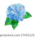 수국, 자양화, 파란색 37450125