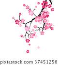Cherry Blossom Background Sakura Flowers Pink On 37451256