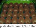 獼猴桃拳擊 37452167