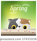 Hello Spring with a cat looking at ladybugs 37455036
