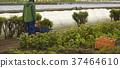 农业外国人收获 37464610