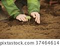 国外雄性种植苗木 37464614
