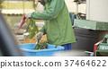 男人洗蔬菜 37464622