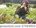 農業蔬菜收穫外國人男子 37464693