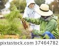 菜收穫農夫婦女和外國人 37464782