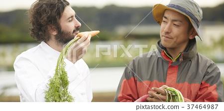 农民和外国厨师 37464987