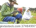 蔬菜收穫農夫和外國男性片劑 37464997