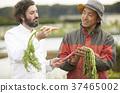 农民和外国厨师 37465002