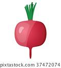 Radishes icon 37472074