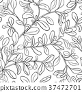 marjoram herb herbal 37472701