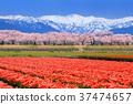 ทัศนียภาพ,ภูมิทัศน์,ดอกไม้ 37474657