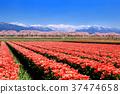 ทัศนียภาพ,ภูมิทัศน์,ดอกไม้ 37474658