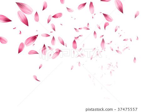 Pink sakura falling petals background. Vector 37475557