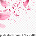 Pink sakura falling petals background. Vector 37475580