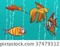 angelfish fish cichlid 37479312