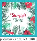 热带 夏天 夏 37481883