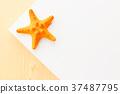 yellow starfish 37487795