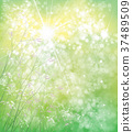 Vector summer,  green,  nature  background. 37489509