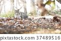 毛孩 貓 貓咪 37489516