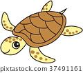 爬行動物 爬蟲類的 海龜 37491161