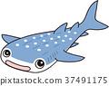 鱼 鲸鲨 鲨鱼 37491175
