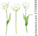 花朵 花 花卉 37498809