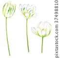 花朵 花 花卉 37498810