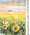 sunflower, sunflowers, summer 37507408