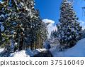 snow, scene, Winter 37516049