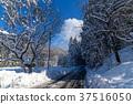snow, scene, Winter 37516050