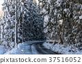 snow, scene, Winter 37516052