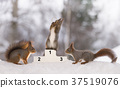 red squirrel stands on podium  with a medal 37519076