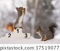 red squirrel standding on a podium  winter games 37519077