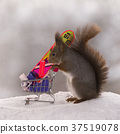 red squirrel stands with a shopping cart in winter 37519078