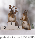 red squirrel stands on podium  with a nut medal 37519085